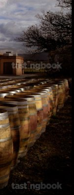 Red wine, Sassicaia 1996